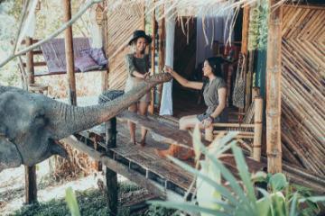 Chai Lai Orchid